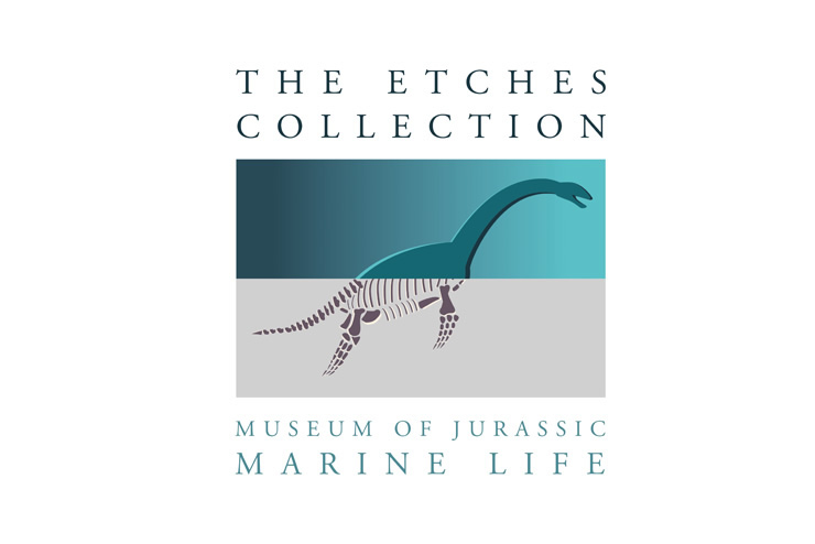 Etches Dinosaur Collection, Kimmeridge - drawing with Penny Wilton.